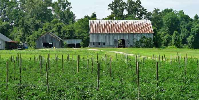 clagett-farm-barns_FredDelventhal_695x352.jpg