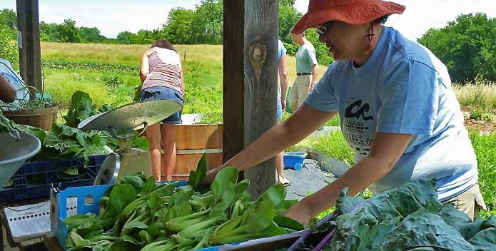 clagett-farm-bok-choy_FredDelventhal_695x352.jpg