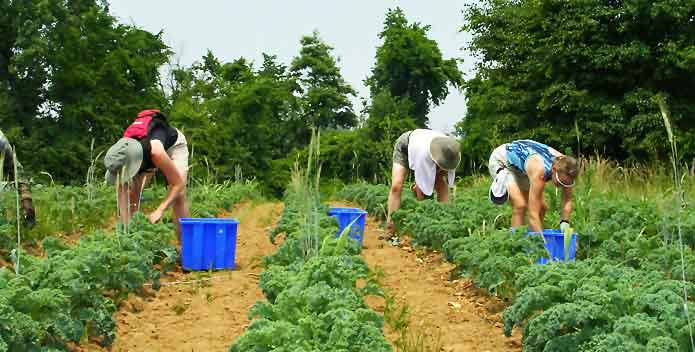 clagett-farm-harvest1_KristinCarbone_695x352.jpg