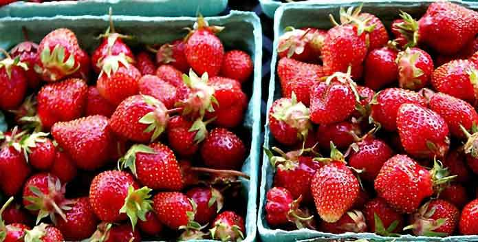 clagett-farm-strawberries-pic25-2006_Nikolai-Vishnevsky_695x352.jpg