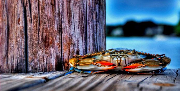 crab_ByNickFornaro_695x352.jpg