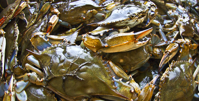 crabs-bushel-CarrieBGrisham_695x352.jpg