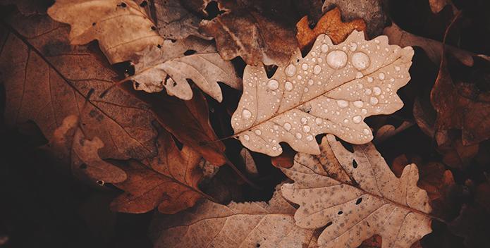 dried leaves in autumn - daniel frank - 695x352