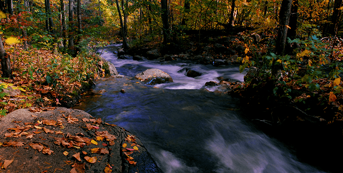 fall leaves and stream - Bill Portlock - 695x352