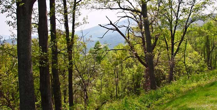 forest-SCNC-0178-CBFStaff_695x352.jpg