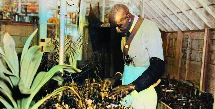A scientist works with plants and soil inside a greenhouse.