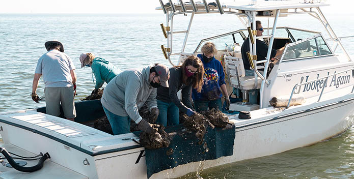 People throw oysters overboard off of a boat at an oyster restoration site in Herring Bay.