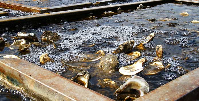 IMG_7443-oyster-tank-695x352