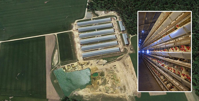 large-chicken-operation-aerial-cafo-md-eastern-shore_GoogleEarth_iStock.jpg