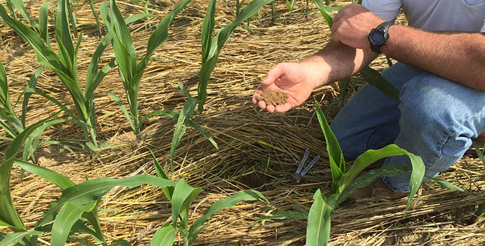 McLaughlin Farm Pennsylvania Cover Crops