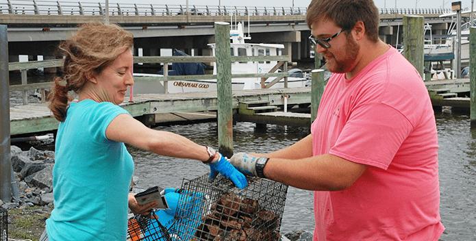 oyster gardeners in virginia 695x352
