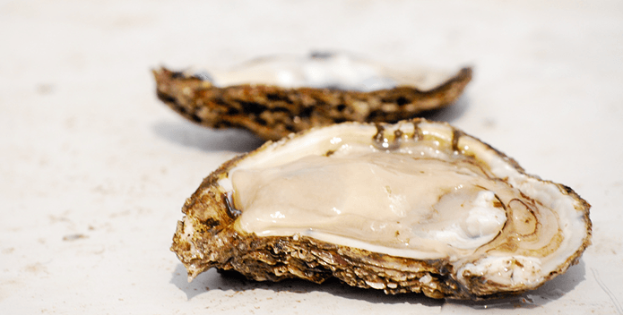 oyster on half shell-CBP-695x355