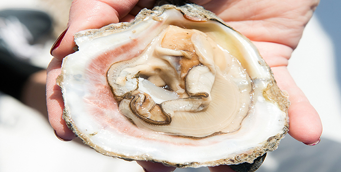 oyster on half shell