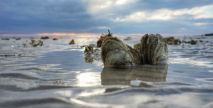 Oysters_RobertDiller_695x352