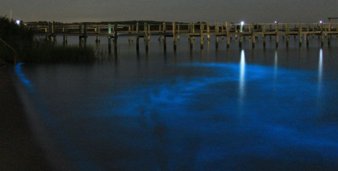 Image of blue-hued bioluminescence.