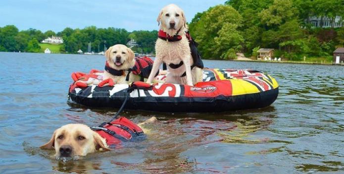 Image of three dogs enjoying the Bay.