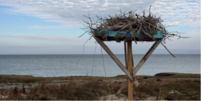 Image of an empty osprey nest as winter approaches.