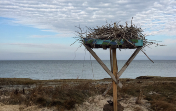 Image of an empty osprey nest in the wintertime.