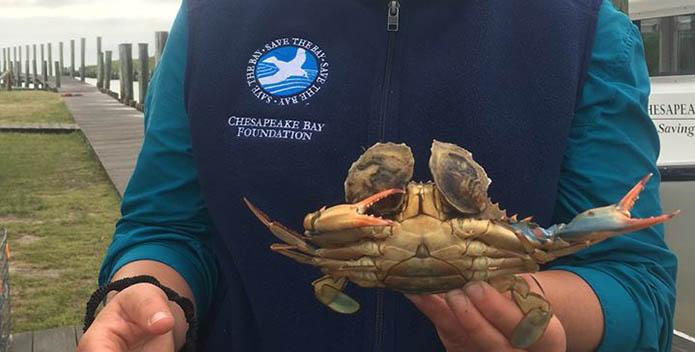 Terducken Crab