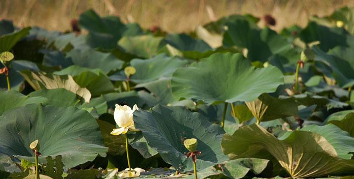 wetland_plants_closeup_Krista-Schlyer-iLCP_695x352.jpg