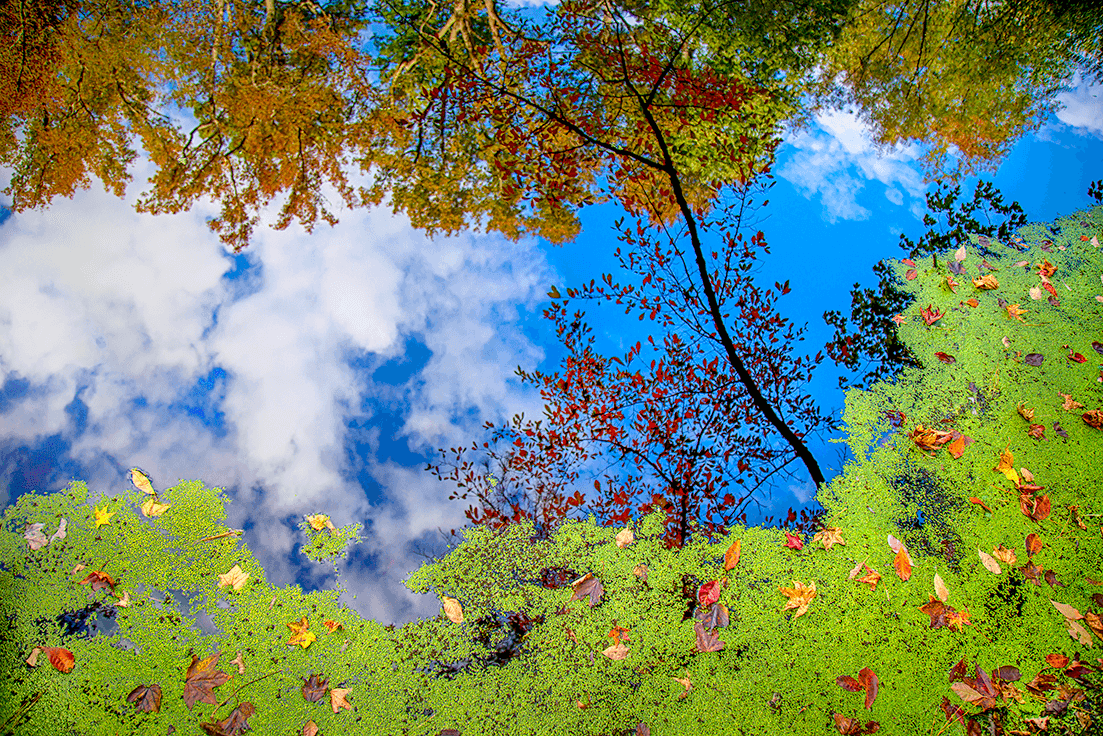 Orange and red foliage, green duckweed, and blue sky with white clouds.