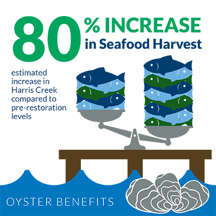 An 80 percent increase in seafood harvest is estimated in Harris Creek compared to pre-oyster-restoration levels.  Graphic credit: copyright Chesapeake Bay Foundation