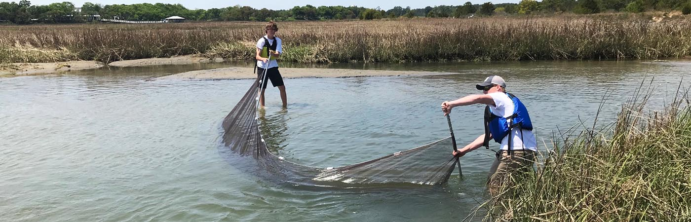 Students drag a seine net through the shallow waters in front of the Brock Environmental Center.