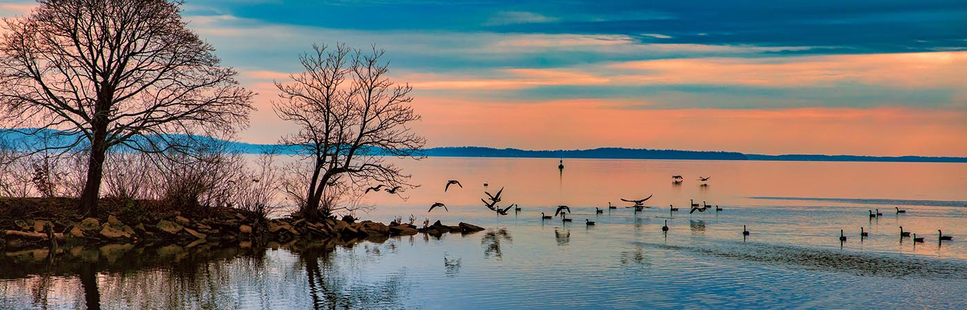 The sky fills with rich blues and apricots during sunset as waterfowl rest or take wing by a stony outcrop.