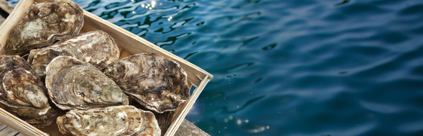 Fresh oysters sit in a crate on a dock, with water in the background.