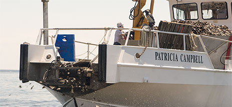 Patricia-Campbell-Cooks-Point-6-09-258-463x215.jpg