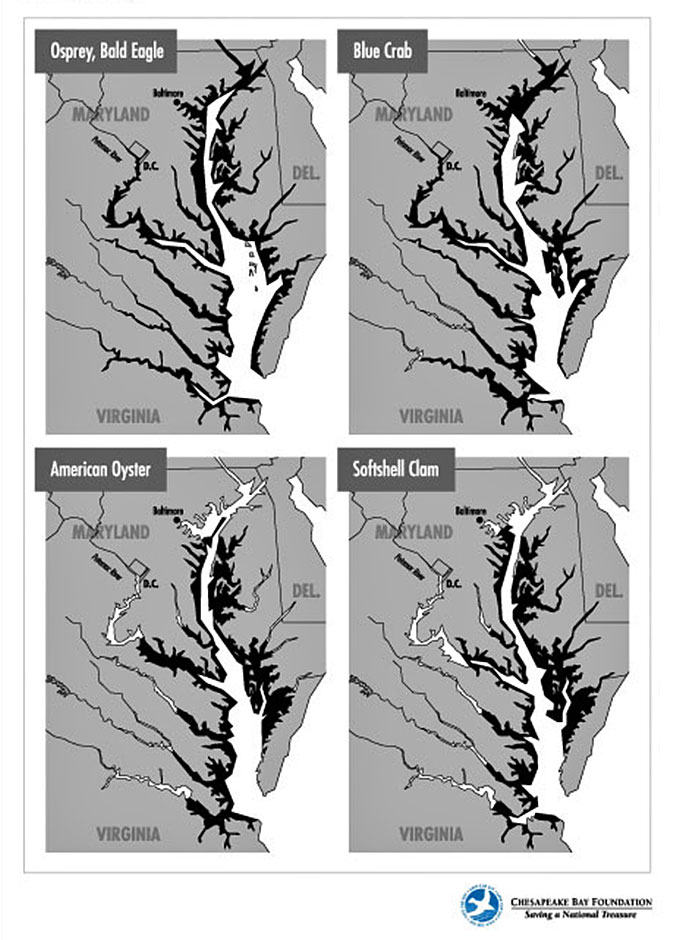 Maps showing Chesapeake Bay habitats of bald eagles, osprey, blue crabs, American oysters, and softshell clams.