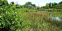 Image of Birdsong Wetlands.