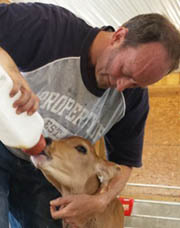 An image of a man feeding a calf.