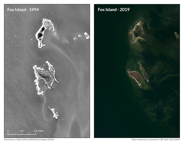 In two side-by-side satellite images of Fox Island from 1994 and 2019, you can see a clear loss of land to the Bay.