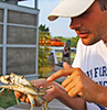 A teacher examines a blue crab. Photo by Kristan Honaker