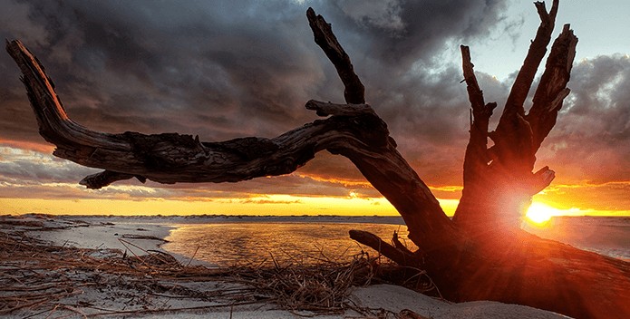 A large piece of driftwood frames the sunset on a deserted beach.