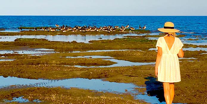 Woman walking in low tide near birds.