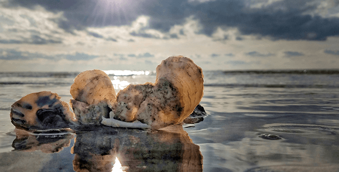 A setting sun reflects off oyster shells and the waters that surround them at low tide.