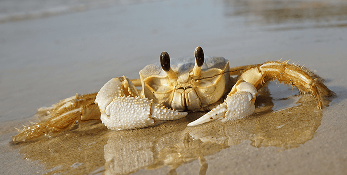 Photo of the Week: Mr. Crabs