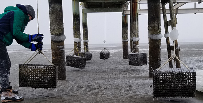 Photo taken under a pier showing oyster cases exposed by an extremely low tide.
